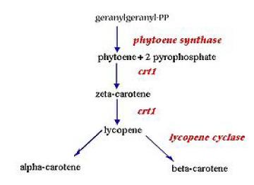 http://medcraveonline.com/APAR/images/APAR-01-00020-g007.png