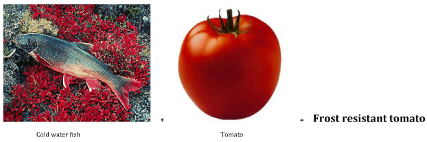 Genetically Modified Food  A Review On Mechanism Of