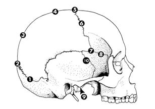 Methods of Skeletal Age Estimation used by Forensic ...