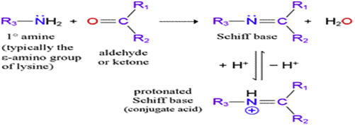 introduction of schiff base pdf