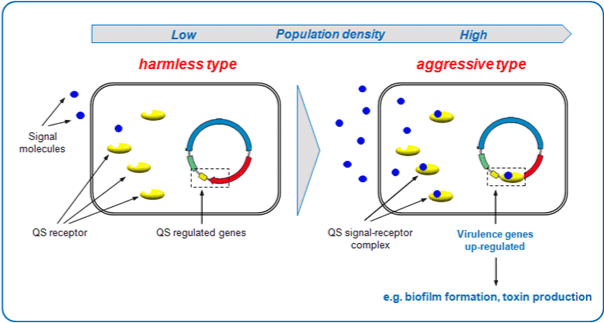 quorum sensing and its importance to biotechnology Importance yields of aquaculture, such as penaeid shrimp hatcheries, are greatly affected by vibriosis, a disease caused by pathogenic vibrio infections since bacterial cell-to-cell communication, known as quorum sensing (qs), regulates pathogenesis of vibrio species in marine environments, qs inhibitors have attracted attention as .