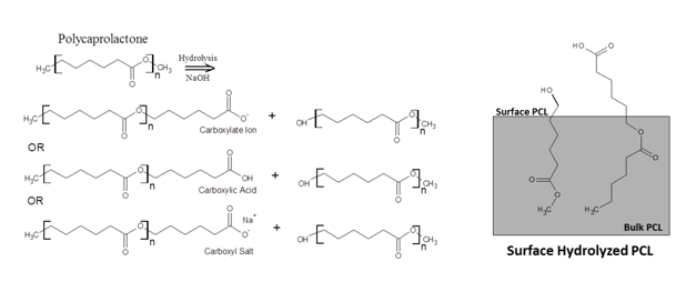 Roles Of Nanofiber Scaffold Structure And Chemistry In