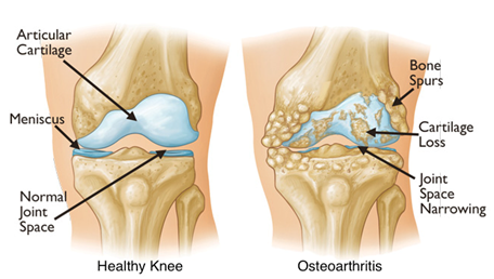 articular cartilage receives oxygen and nutrients from