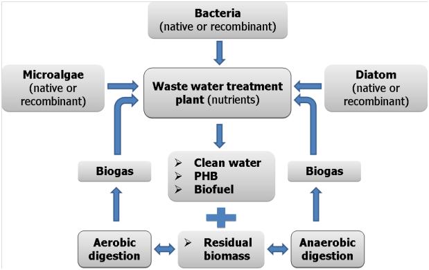 Can bio-plastics replace non-biodegradable plastics