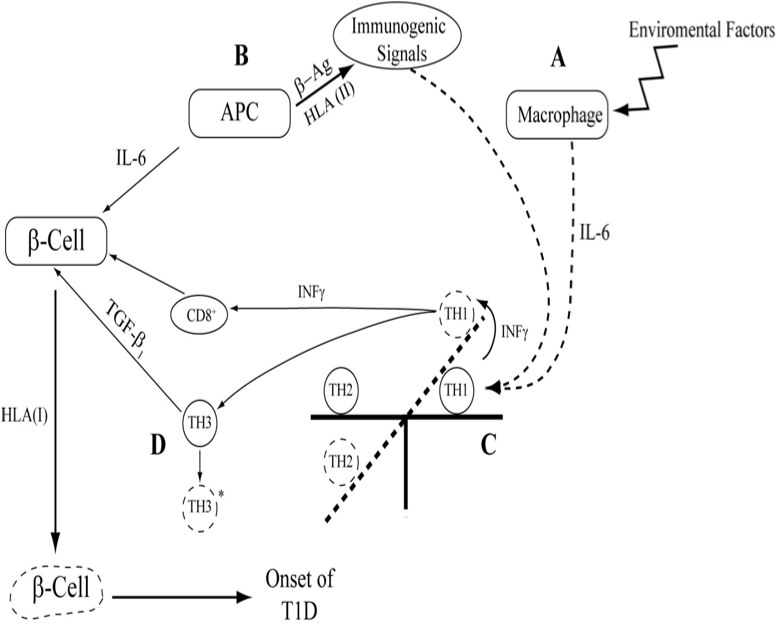 Networking Between Cytokine Gene Polymorphisms Profile And Hla In