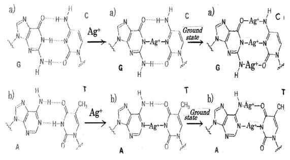 Antibacterial mechanism of Ag+ ions for bacteriolyses of